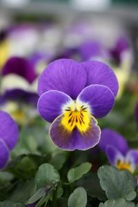 Blumen 2015 153