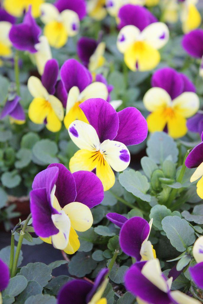 Der Frühling kommt! – Garten Prentl
