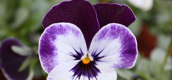 Blumen 2015 206
