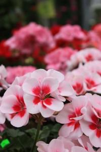 Blumen 2015 233