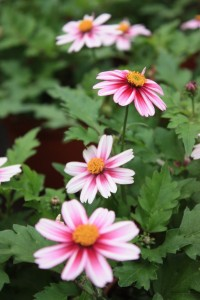 Blumen 2015 235