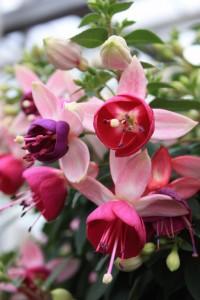 Blumen 2015 238