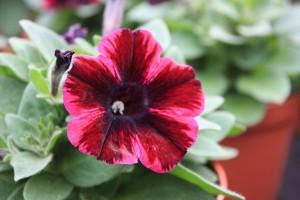 Blumen 2015 239