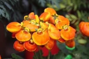 Blumen 2015 263