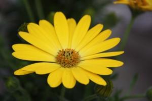 Blumen 2015 268