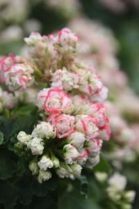 Blumen 2015 272