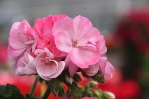 Blumen 2015 274