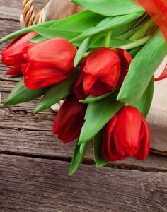 Tulpen Valentin